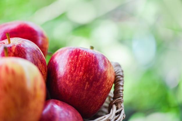Maçãs vermelhas frescas pomar - colheita de maçã na cesta coletar frutas jardim verde natureza