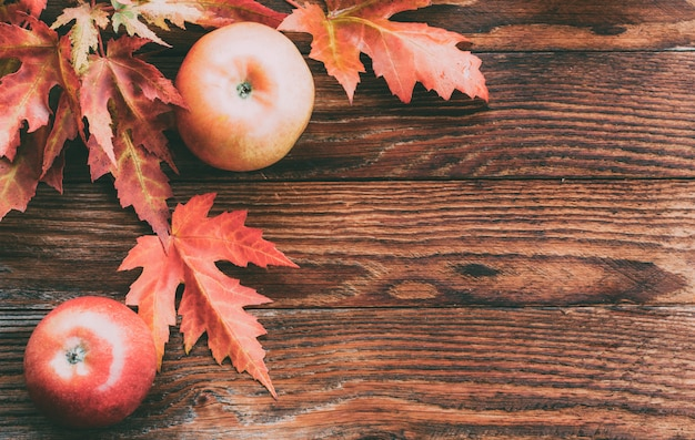 Maçãs vermelhas maduras e folhas de bordo coloridas no outono