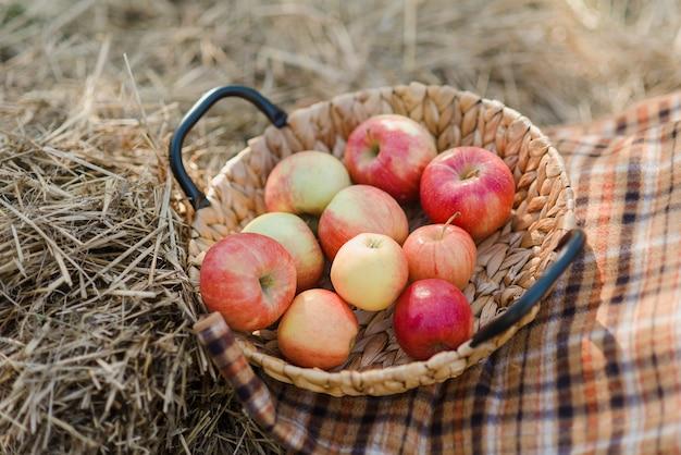 Maçãs vermelhas maduras e peras na cesta na grama na grama.