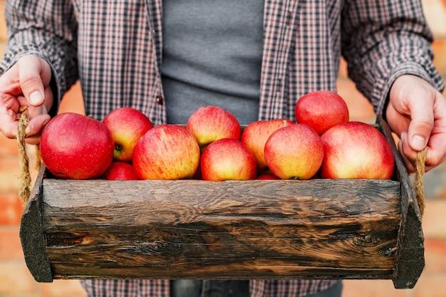 Maçãs vermelhas maduras frescas e orgânicas em caixa de madeira nas mãos masculinas. colheita de maçãs vermelhas para alimentação no outono