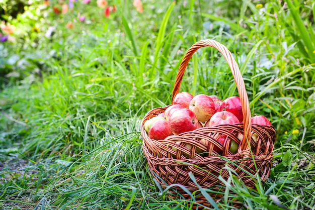 Maçãs vermelhas na cesta na grama verde no jardim