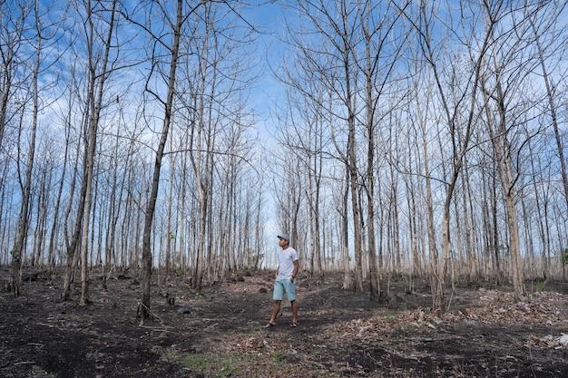 Macho em pé na floresta com árvores sem folhas