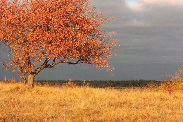 Macieira solitária em um campo na luz do sol