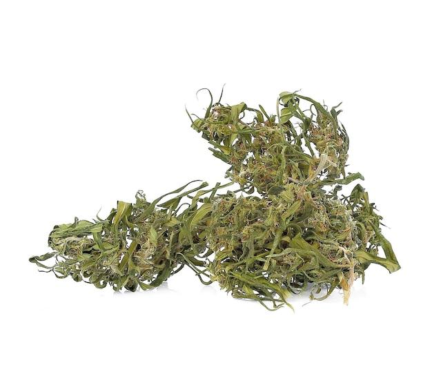 Maconha medicinal isolada em fundo branco