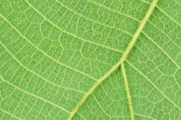 Macro close-up verde folha textura de fundo