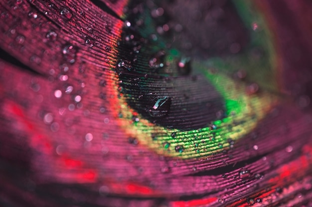 Macro colorido vibrante close-up de penas de pavão com gotas de água