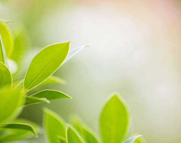 Macro das folhas da árvore para o fundo da natureza e salvar o conceito verde