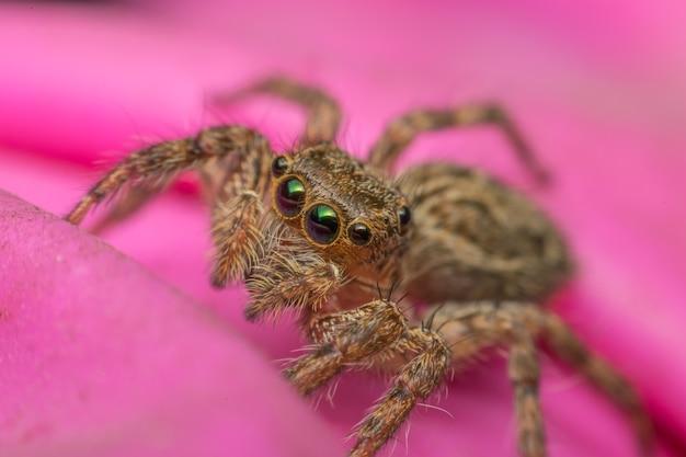Macro de aranha inseto foco no olho close-up no tecido rosa na natureza