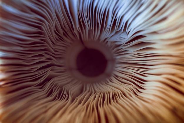 Macro de brânquias de cogumelo