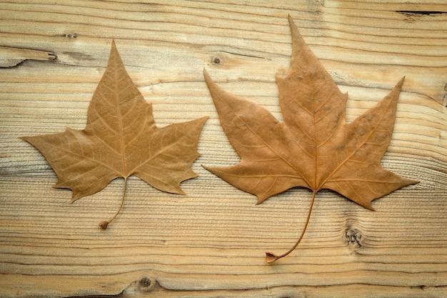 Macro de duas folhas secas no outono