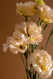 Macro de eustoma surreal cromo escuro flor laranja e branco isolado no marrom ainda vida estética co ...