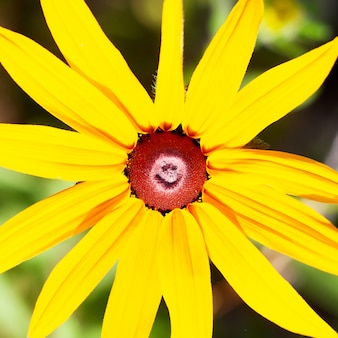 Macro de flor amarela