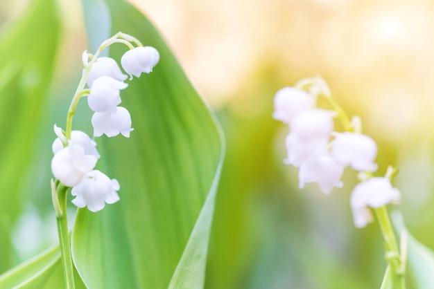 Macro de flores brancas silvestres de lírio do vale
