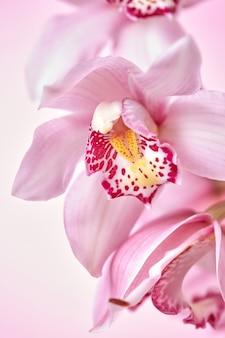 Macro de flores de orquídea rosa com um padrão apresentado