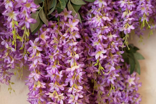 Macro de flores roxas das glicínias. flor de glicínias. as glicínias chinesas e as glicínias japonesas floribunda macrobotris florescem no jardim. tempo de primavera. lindas flores roxas florescem no jardim primavera