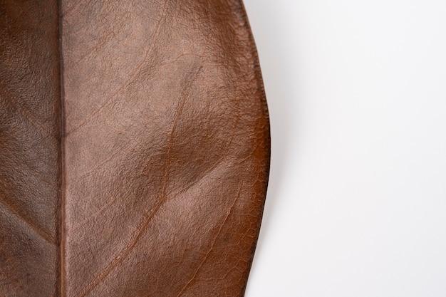 Macro de folha de magnólia seca marrom em um fundo branco extremo close-up de folha de magnólia seca