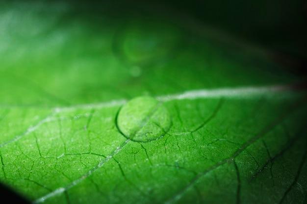 Macro de uma folha verde