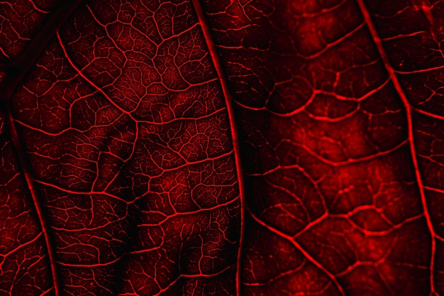 Macro de uma folha vermelha
