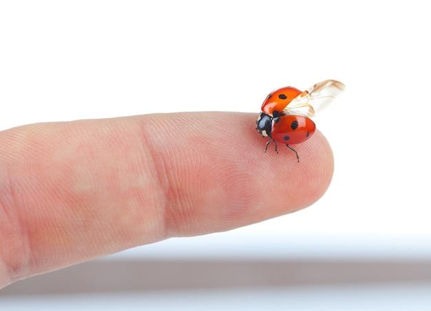 Macro de uma joaninha sentada no dedo
