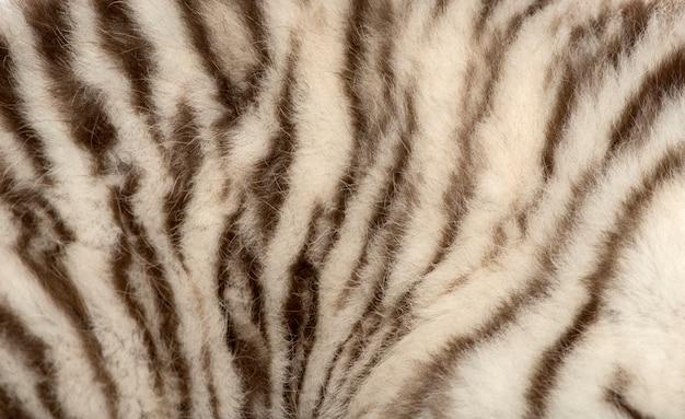 Macro de uma pele de tigre branco