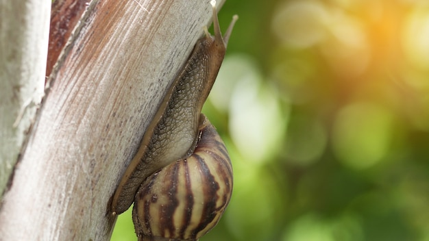 Macro do caracol que rasteja na natureza.