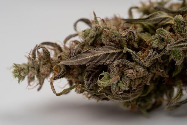 Macro dried medical marijuana close up de folhas de cannabis e flores femininas saúde mental