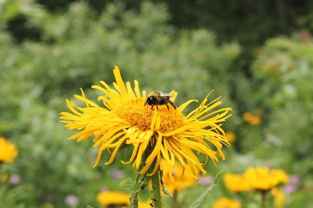 Macro e close-up de abelha, animais selvagens de insetos, natureza e superfície.