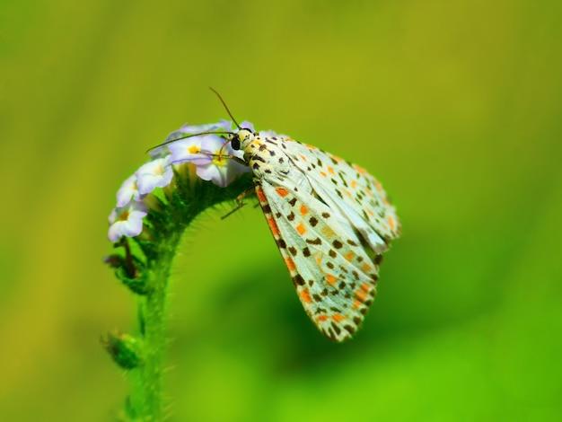 Macro e closeup pequena borboleta em flor.