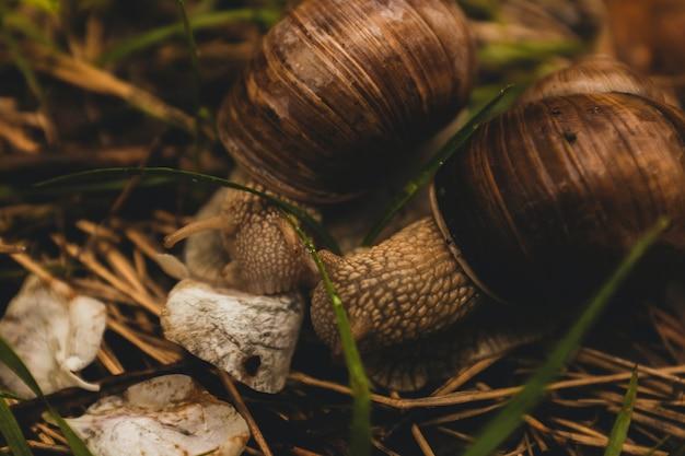 Macro fotografia de caracol