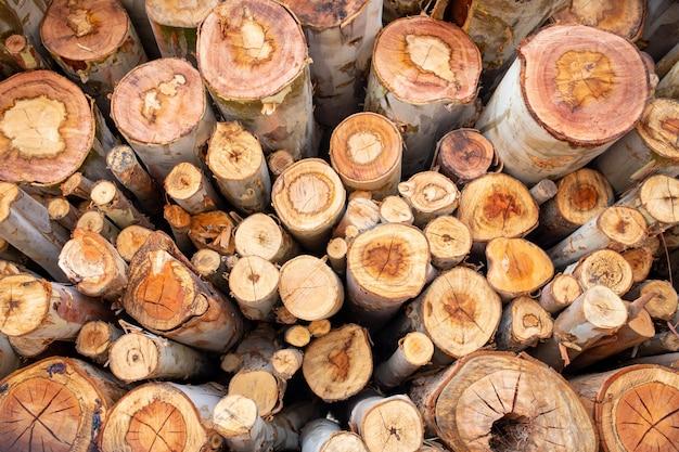 Madeira de eucalipto organizada em camadas, toras de madeira de eucalipto prontas para a indústria.