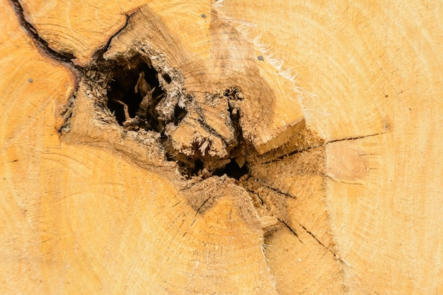 Madeira de log de anel de árvore. textura orgânica natural com superfície rachada e áspera. visão macro do close-up da seção da árvore de madeira de corte final com rachaduras. superfície de madeira com anéis anuais.