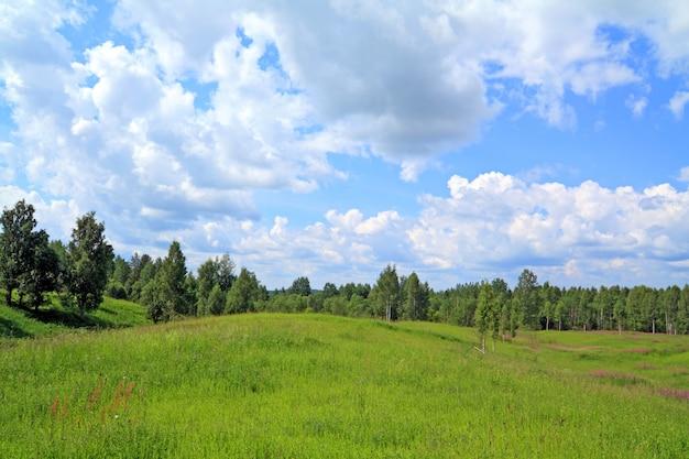 Madeira de vidoeiro perto de campo verde