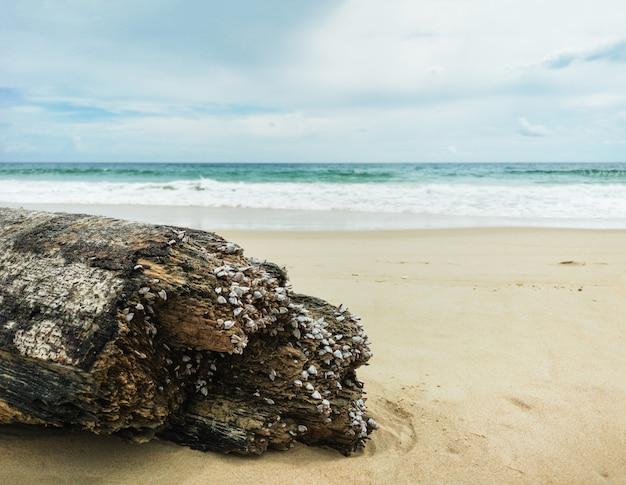 Madeira deteriorada no fundo bonito da praia.