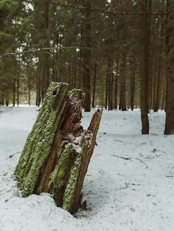 Madeira em uma floresta cercada por árvores e musgos cobertos de neve com um fundo desfocado