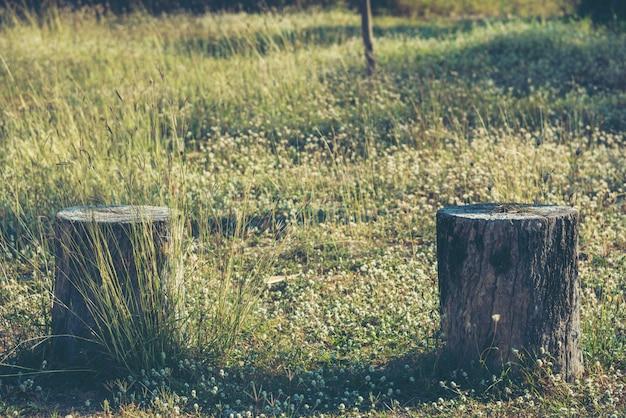 Madeira velha com as flores no gramado bonito.