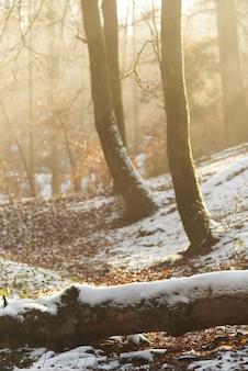 Madeiras e folhas em uma floresta coberta de neve sob a luz solar