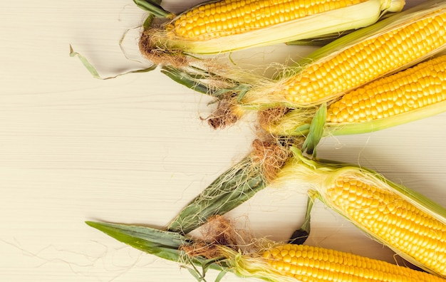 Maduras espigas de milho em um fundo
