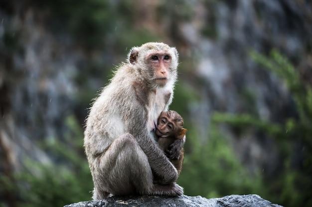Mãe do macaco com retrato do bebê. olhos de macaco.