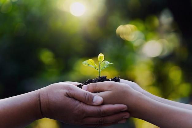 Mãe e criança que guardam a planta nova com luz solar na natureza verde. conceito eco dia da terra