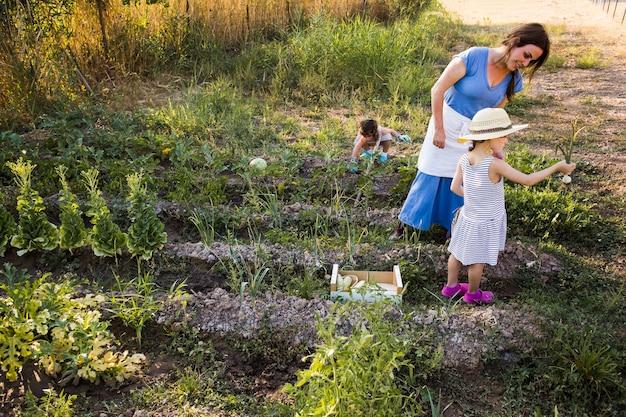 Mãe e filha colhidas cebolinha no campo