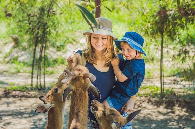 Mãe e filho alimentando lindos cervos em um zoológico tropical