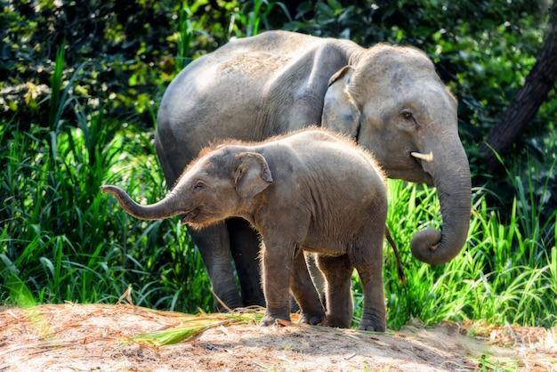 Mãe elefante com bebê