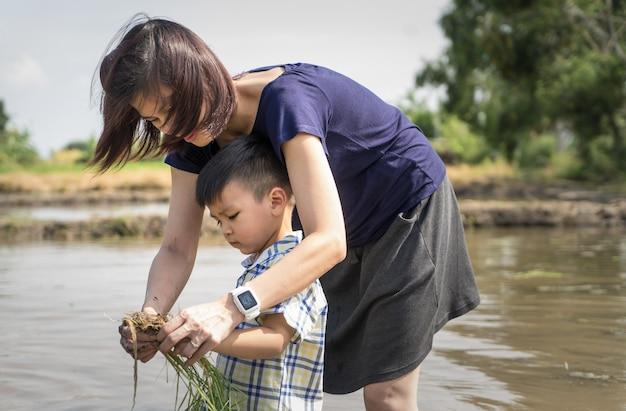 Mãe está ensinando seu filho a plantar o arroz no arrozal.