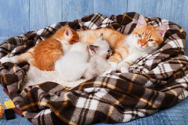Mãe gato está amamentando seus gatinhos no cobertor xadrez