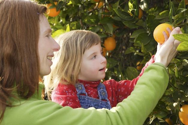 Mãe, mostrando, filha, laranjeira, colheita árvore