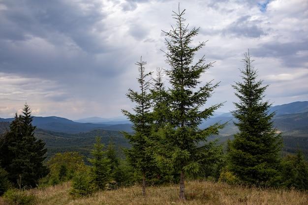Magnífica vista da floresta de coníferas nas poderosas montanhas dos cárpatos e um lindo fundo de céu nublado