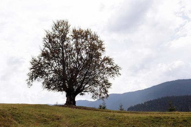 Magnífica vista da grande árvore conífera nas poderosas montanhas dos cárpatos e um lindo fundo de céu nublado