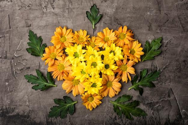 Magníficas flores de crisântemo em forma de coração em um fundo escuro
