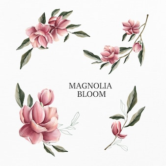 Magnolia bloom conjunto aquarela