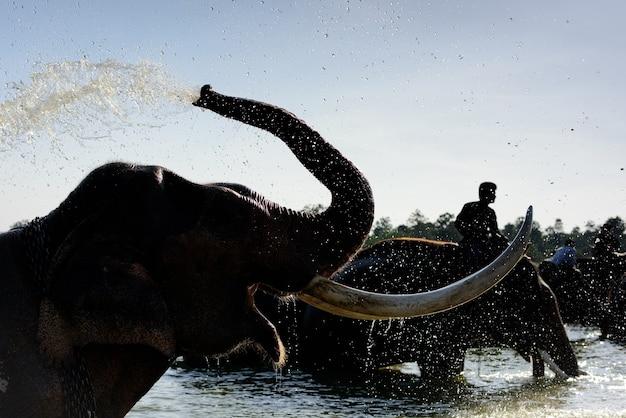 Mahout montando seu elefante na piscina para o banho.